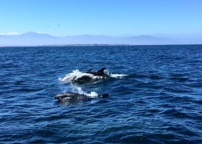 Dolphins at Isla Damas